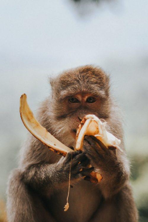 gaan met die banaan rifqi-ali-ridho-444440-unsplash